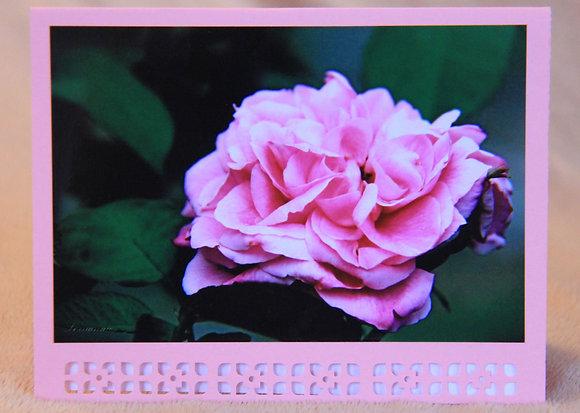 Blank - Pink Rose