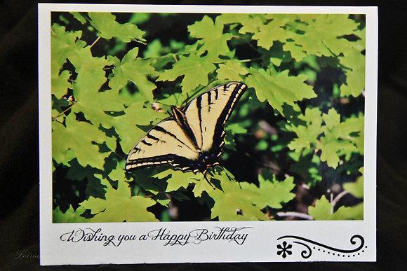BWS - Birthday - Yellow Butterfly