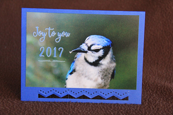 Happy 2017 New Year Blue Jay