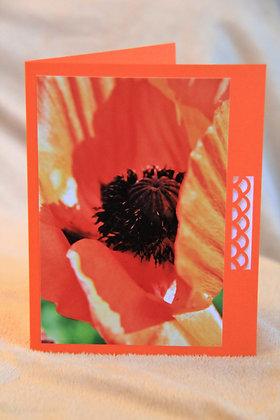 Blank - Orange Poppy Centre