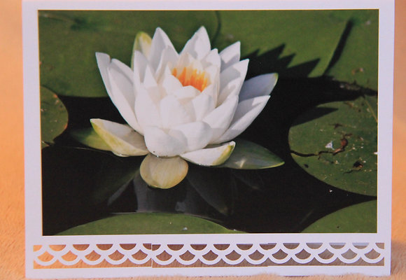 Blank - White Water Lily Bloom
