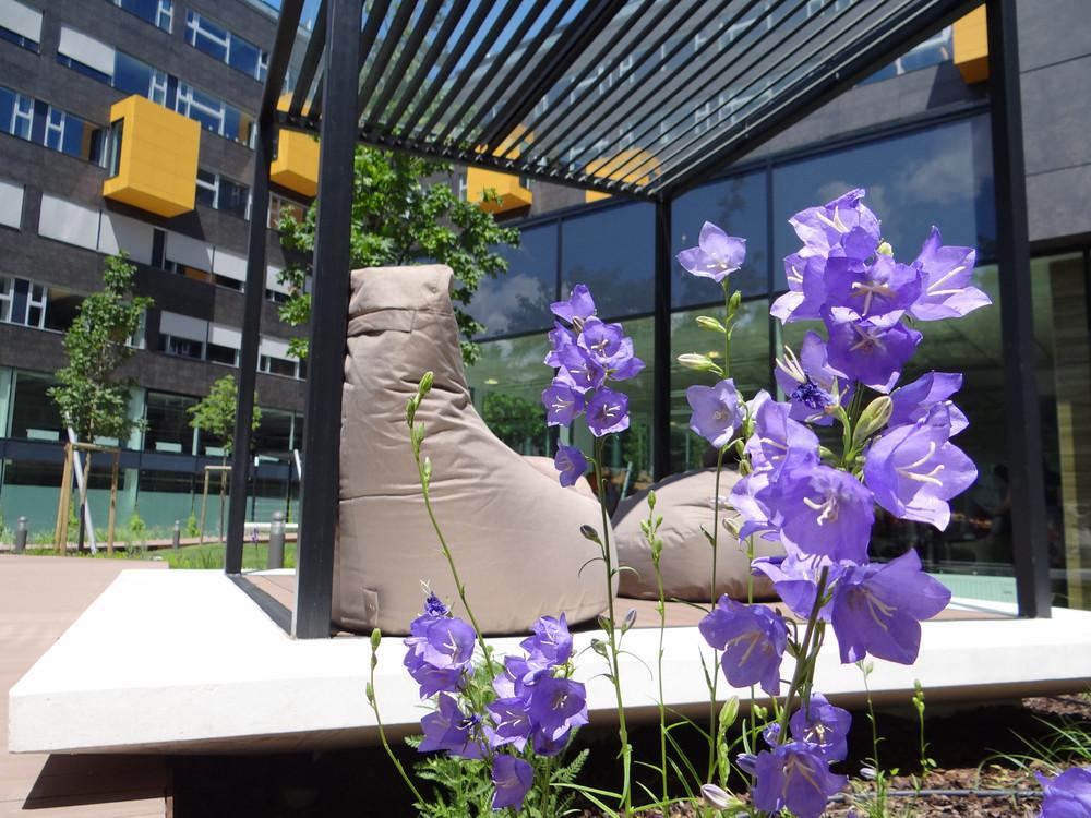 004_Green House- belso kert nyari virago