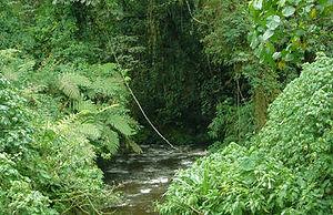 bwindi_vegetation.jpg