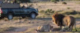 safari-01.jpg