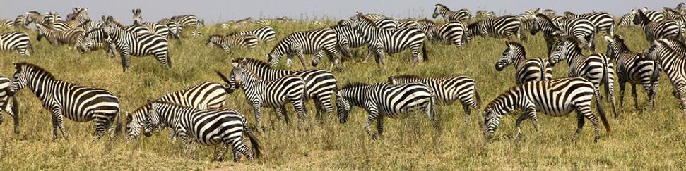 Safaris en Tanzanie