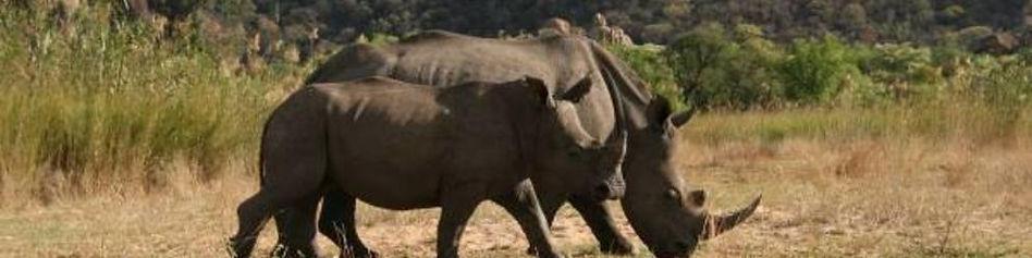 matopos_2_rhinos.jpg