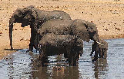 Circuits et safaris au Kenya