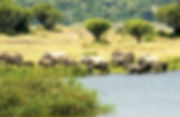 southern_queen_elizabeth_national_park_2