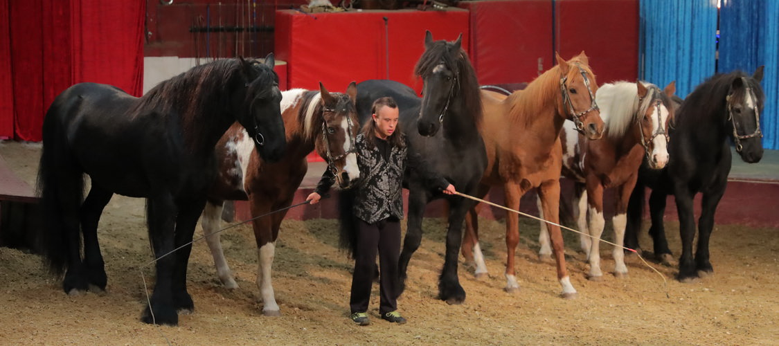 vargas-show-equestre-009