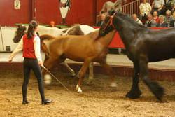 vargas-show-equestre-011