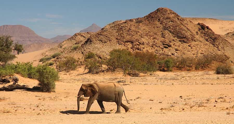 Circuit en Namibie : Moringa & Fish River Canyon Circuit en lodges  de 15 jours / 14 nuits