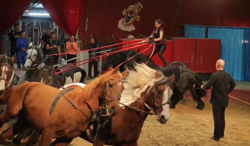 vargas-show-equestre-024
