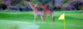 golf-girafes.jpg