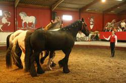 vargas-show-equestre-010