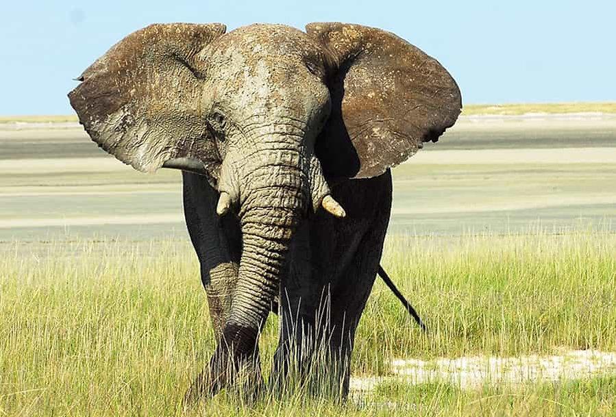 Circuit en Namibie : sous le charme namibien
