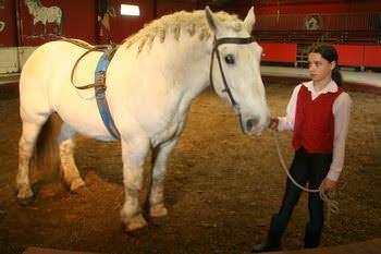 vargas-show-equestre-003