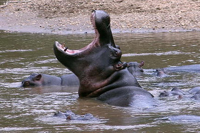 Safaris et circuits en Ouganda