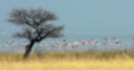 Circuit en Namibie : Highlights Circuit en lodges de11 jours / 10 nuits
