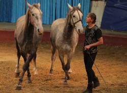 vargas-show-equestre-016