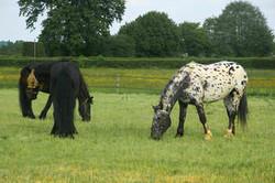 vargas-show-equestre-013