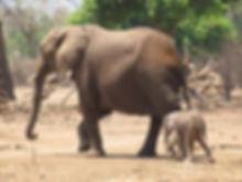 Safari en Zambie et au Zimbabwe