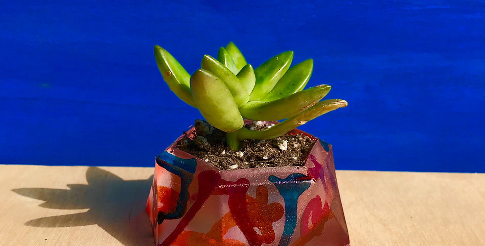 Graffiti Planter - Hexagon