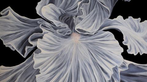 Apparizione di un fiore