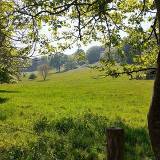 Field near Bridport