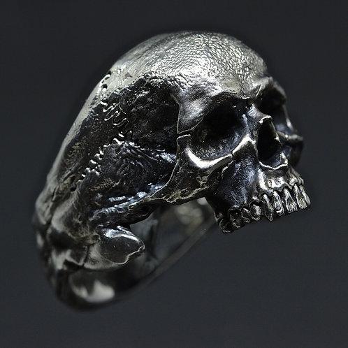 Big Half-Jaws Skull