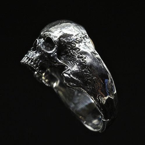 Small Half-Jaws Skull
