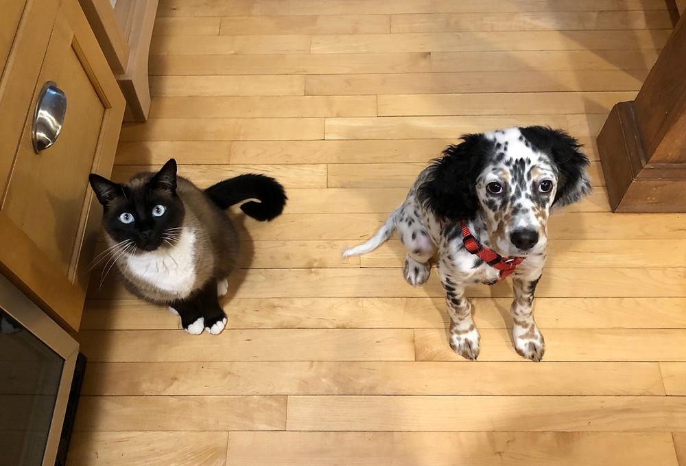 Django & Autumn agree that treats are worth a temporary truce.