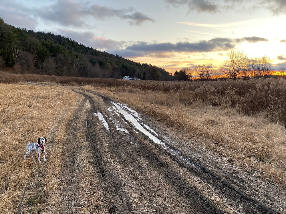 Autumn demonstrates WHOA on a late afternoon walk in the field across from our house along the Connecticut River.