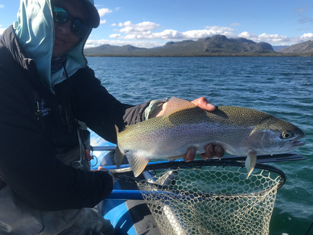 Mickey Finn Goes To Patagonia