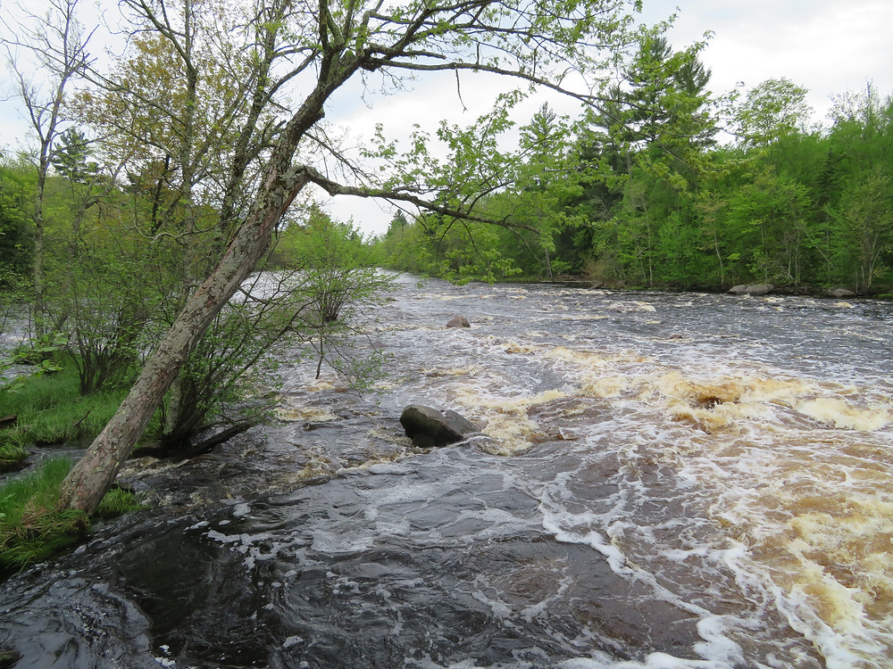 South Fork of Flambeau River, May 2017