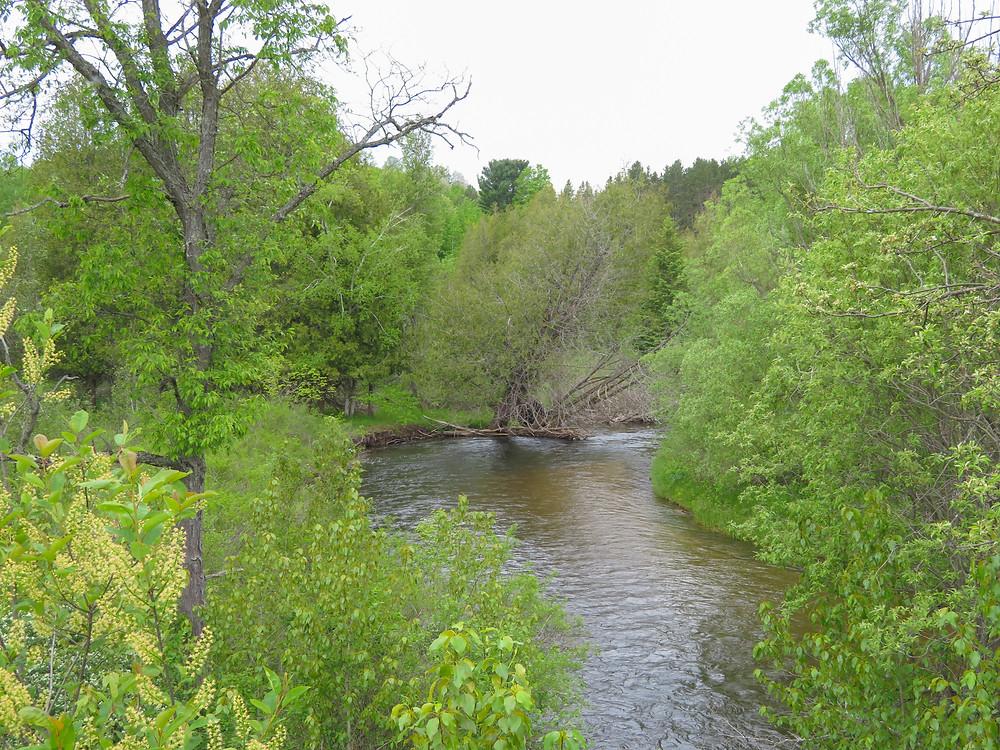 The Sturgeon River below Rondo.