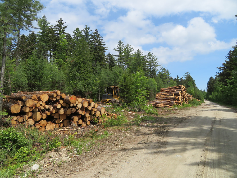 Logging road into the Rapid River