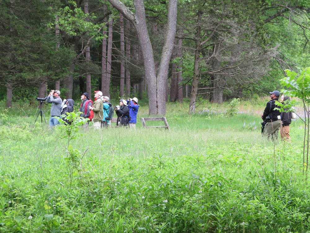 "Birders scan the treetops at Aldo Leopold's 'sand farm"" near Baraboo, Wisconsin."