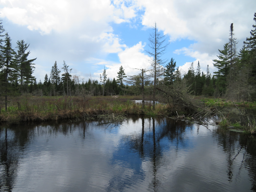 The beaver dam at Frenchman's Pond.