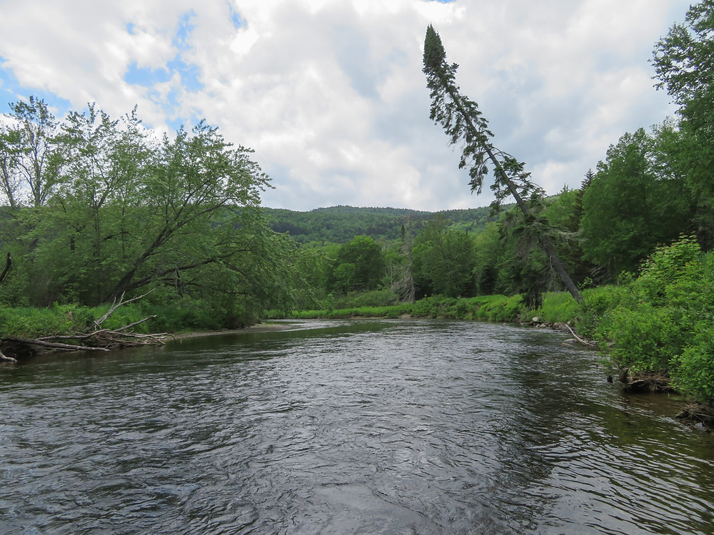 Magalloway River below Rt 16 bridge.
