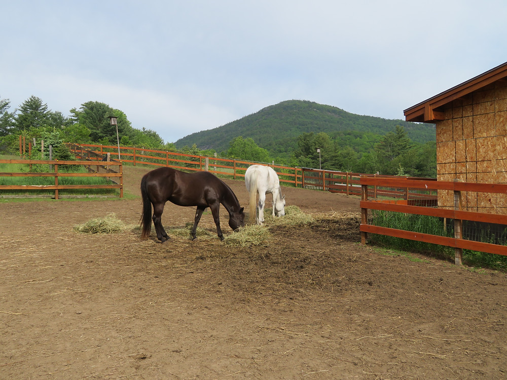 Crane Mountain Valley Horse Rescue