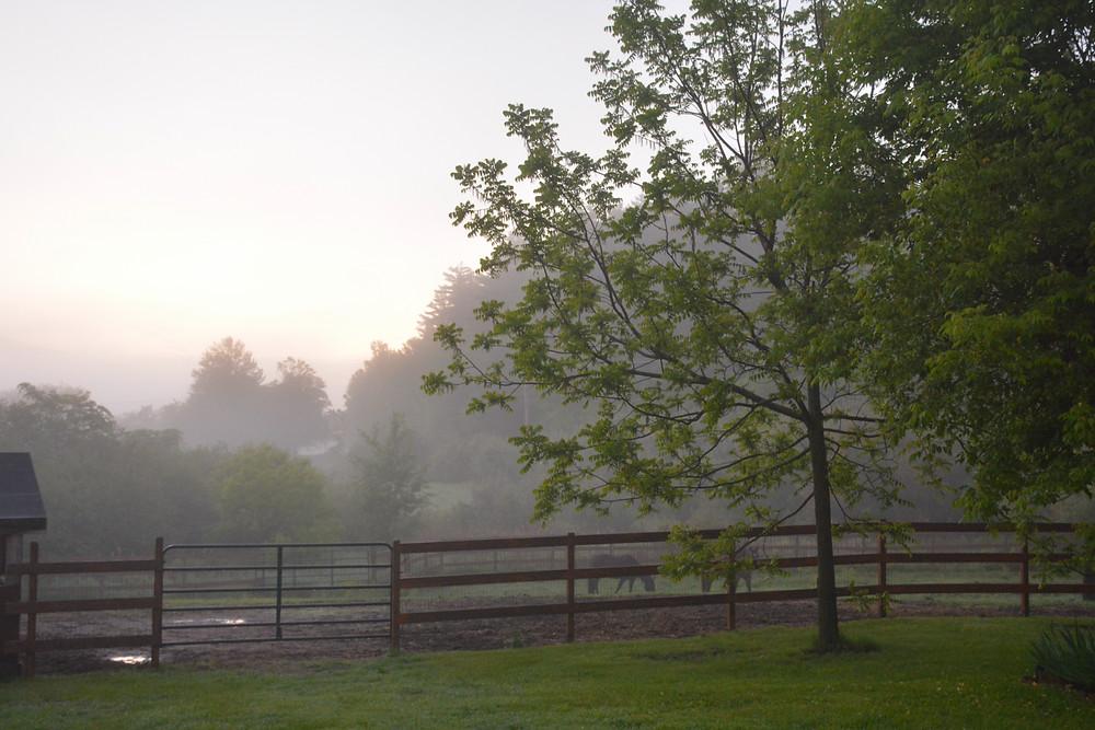 Morning at the horse farm.