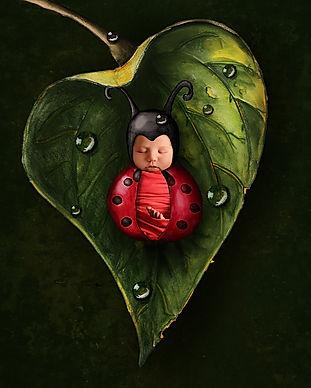 ladybug.leaf2.jpg