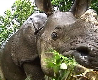 Rhino Close Up.jpg