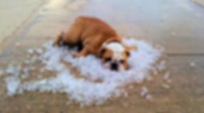 A dog wishing he had an appliance repair technician to repair his ice maker
