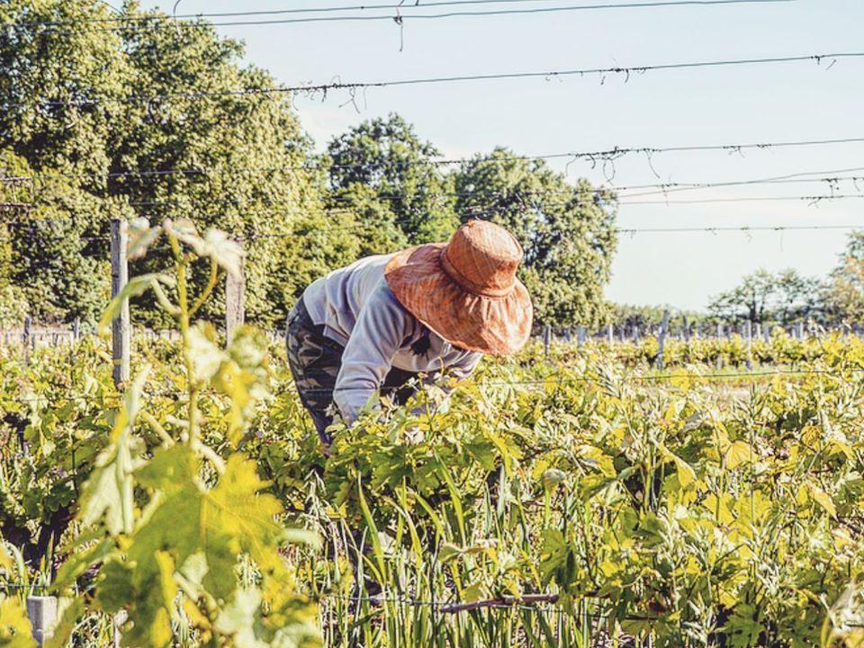 photo vigne vigneronne Château de Chantegrive