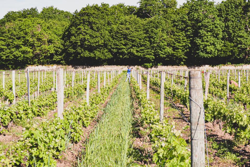 Enherbement HVE3 Château de Chantegrive AOC Graves