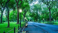 Central Park NY, NY 6am