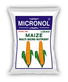 MAIZE pIC.png