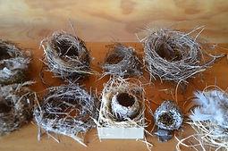 nests 2.JPG