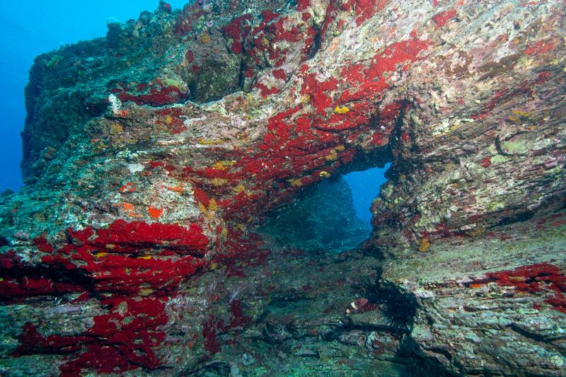 Fantasy Reef
